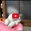 Gatti rompiscatole