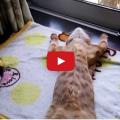 Come far rilassare il tuo gatto.