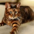 Piccoli segreti per rendere felice il vostro gatto