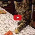 Test  Gatto VS würstel