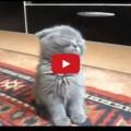 Gatto VS Sonno