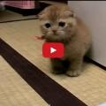 Aghi - Un micio molto simpatico