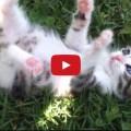 Gattino che ride come un bambino