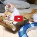 Gattino pigrone e fratellini dispettosi