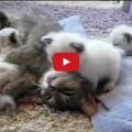 Gattino abbraccia Mamma Gatto