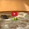 Il gattino Schizzo