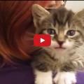Guardate questo piccolo felino come risponde alle domande