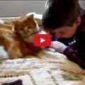La Felicità di un bambino che ritrova il suo gatto smarrito