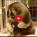 Lo sguardo dell'animale più tenero del mondo