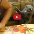 Gatto molto educato