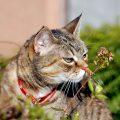 Le piante tossiche più pericolose per i gatti