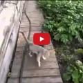 Cane riporta gatto a casa