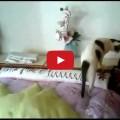 Gatto che risponde al telefono
