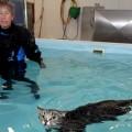 Il gatto paralizzato e la fisioterapia in acqua