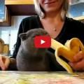Il Gatto mangia le banane