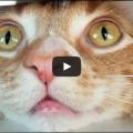 Vi siete mai chiesti come gatti vedono il mondo che li circonda?