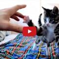 Guardare un gatto mentre gioca è puro spettacolo