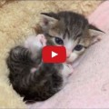 Gattino che gioca da solo