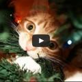 Guida per preparare un albero di natale con un gatto