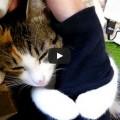 Un gatto non dice ti voglio bene ..lo dimostra