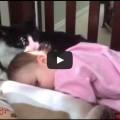 Una splendida gattina accudisce una cucciola umana