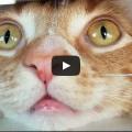Cole & Marmalade - Cosa vede un gatto...
