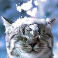 Arriva il freddo. Consigli per proteggere cani e gatti