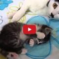 Mamma gatta conforta il suo cucciolo
