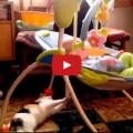 Un gatto straordinario
