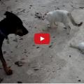 Mamma gatta sfida chiunque per proteggere il proprio cucciolo.