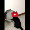 Gatto batterista