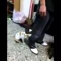 Gatto si improvvisa Body Guards per difendere la sua umana.