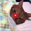 Gatto amante del letto non vuol vuole proprio alzarsi.