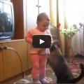 I gatti non sono giocattoli
