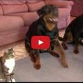 Se un gatto vuole può fare qualsiasi cosa .. Se vuole !!