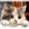 I principali stress del gatto