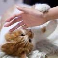 Gatti che graffiano e mordono