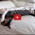 Penso che nessuno sappia godere appieno del piacere di un divano a parte i gatti.