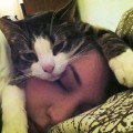 I gatti percepiscono il nostro amore?