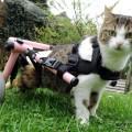 Animali? Una gatta con sedia a rotelle..adotta dei gattini!