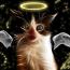 """I gatti hanno un legame """"magico"""" con il mondo invisibile."""