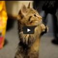 Vivere con un gatto in casa migliora la vita e la salute.