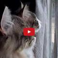 Gatti commentano tra loro il cinguettio degli uccelli.