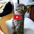 Gatto impiccione