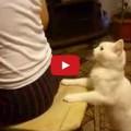 Gatto vuole attenzione