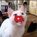 Gatto parla con un linguaggio incomprensibile.