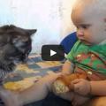 Gatto e bambino fanno merenda insieme.