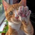 """""""Gli manca solo la parola"""": no, chi ha un gatto sa che non è vero!"""