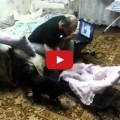 Papà finge di picchiare il figlio neonato il gatto lo difende.