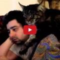 Il mio gatto mi conforta